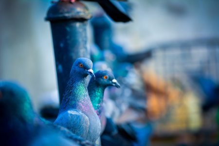 animals-blurred-background-close-up-1431464